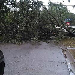 <div class='meta'><div class='origin-logo' data-origin='none'></div><span class='caption-text' data-credit=''>A tree was knocked down due to high winds and is blocking a street in Houston area. If you have photos, email them to news@abc13.com or upload them using #abc13eyewitness</span></div>