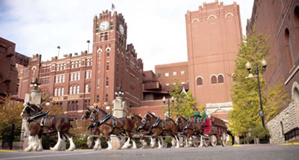 "<div class=""meta image-caption""><div class=""origin-logo origin-image ktrk""><span>KTRK</span></div><span class=""caption-text"">Budweiser Clydesdales turning through the St. Louis Brewery (Anheuser-Busch)</span></div>"