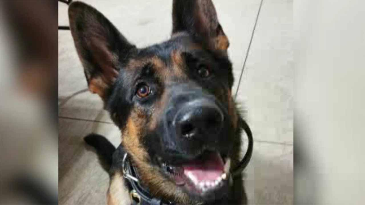 Officer set to select new dog after K9 killed