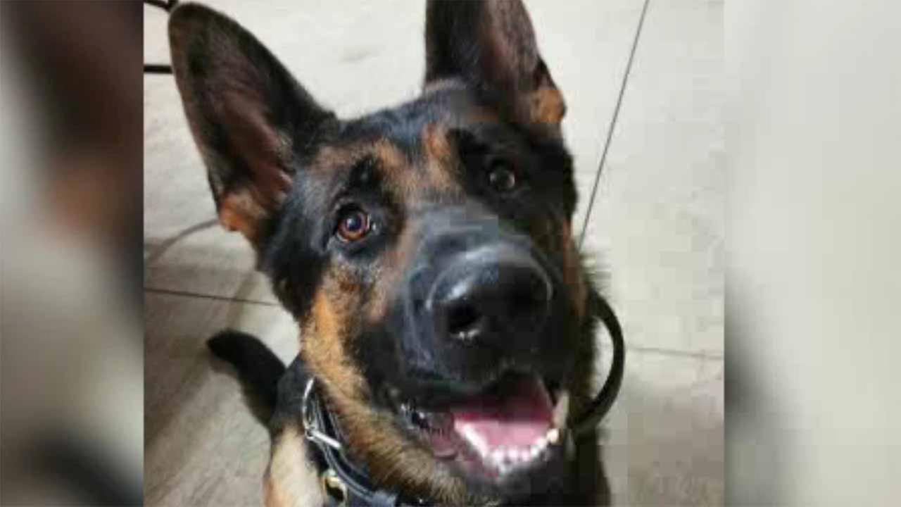 Officer set to select new dog after K9 killed
