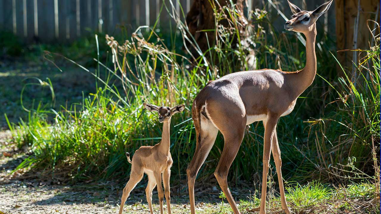 Houston Zoo welcomes first baby born in 2016Stephanie Adams