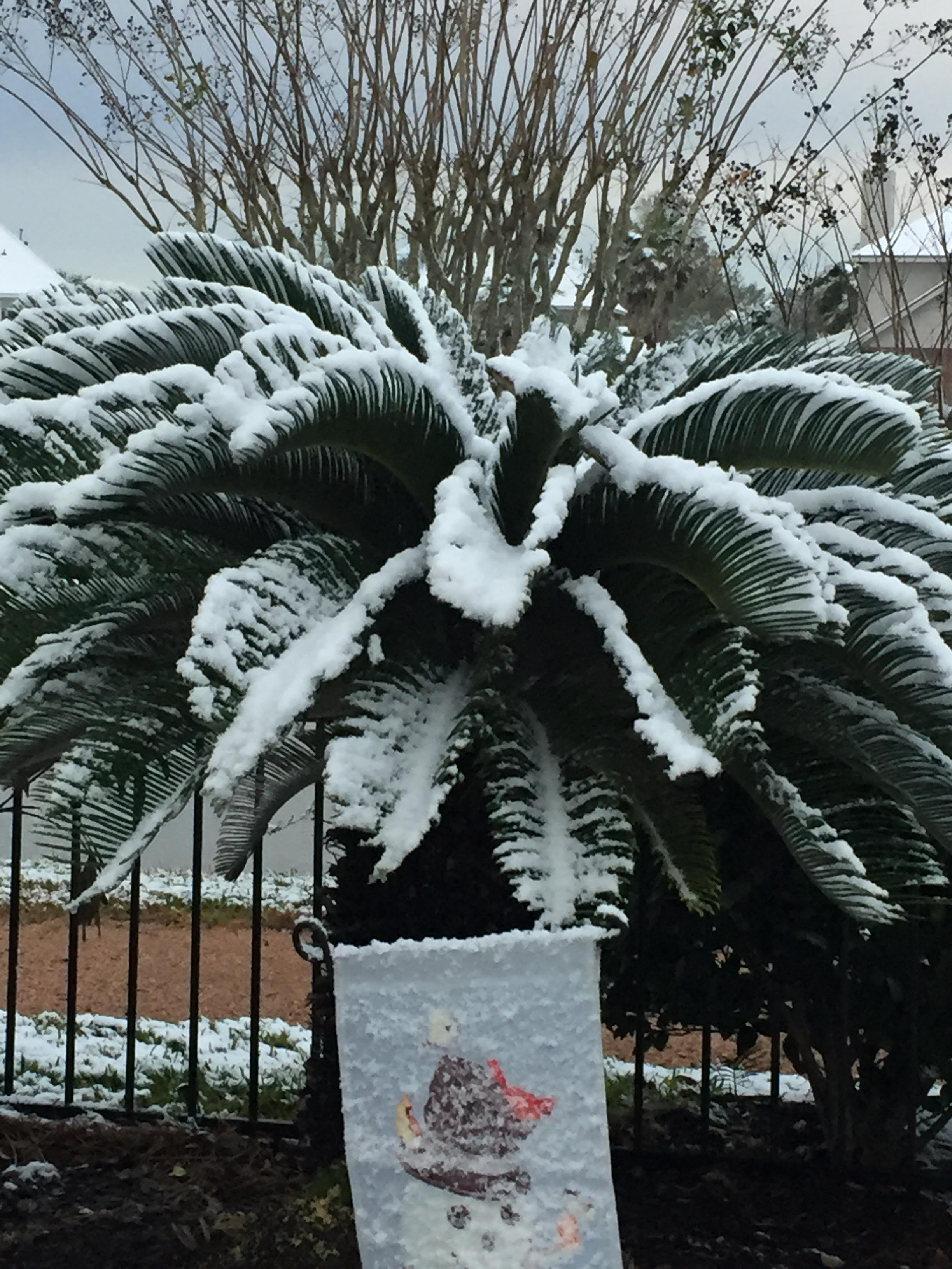 <div class='meta'><div class='origin-logo' data-origin='none'></div><span class='caption-text' data-credit=''>Snow in Friendswood</span></div>