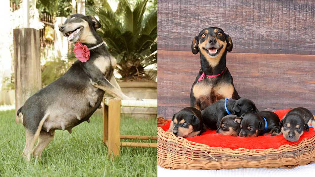 Remember the pregnant puppy who slayed her maternity shoot? She is back to show off her puppies