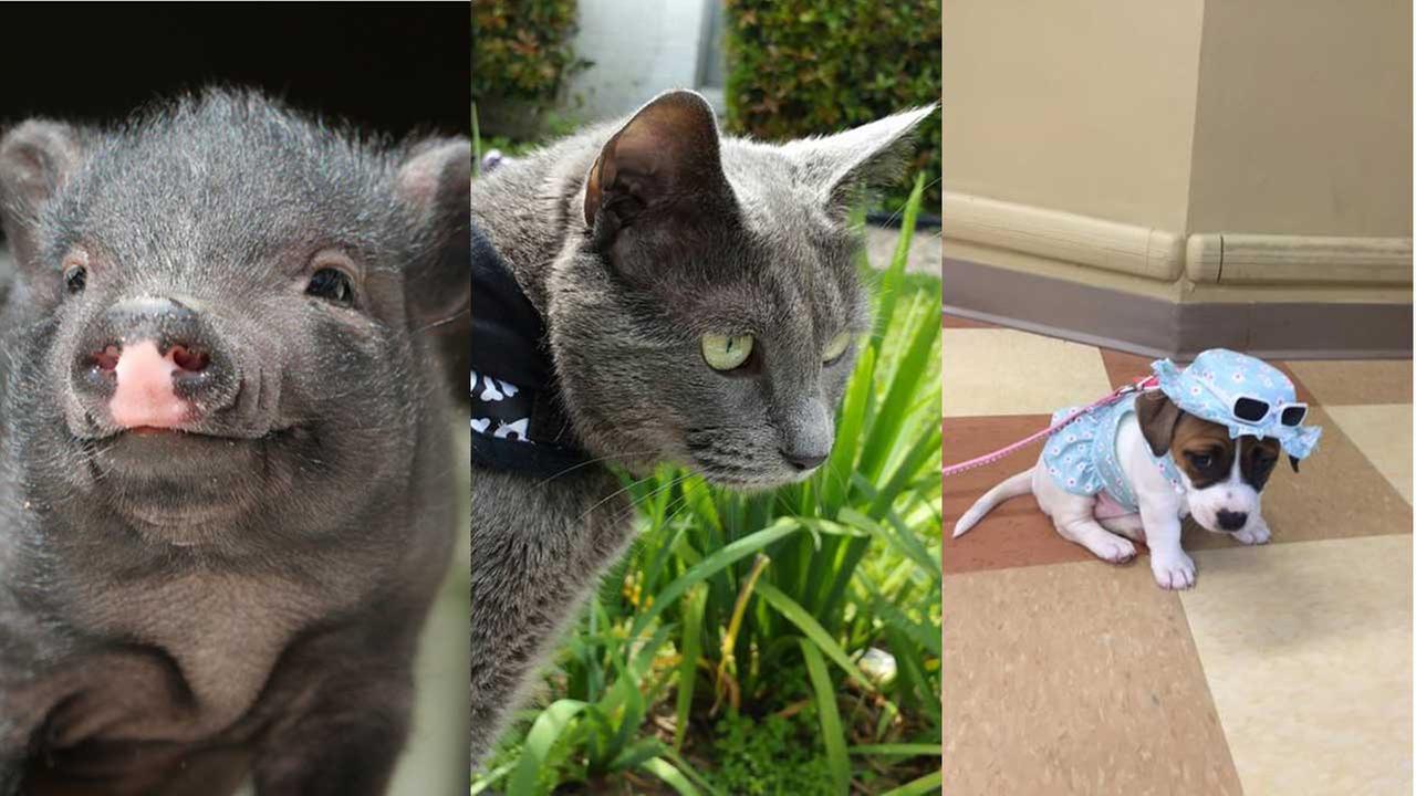 National Pet Day viewer photos