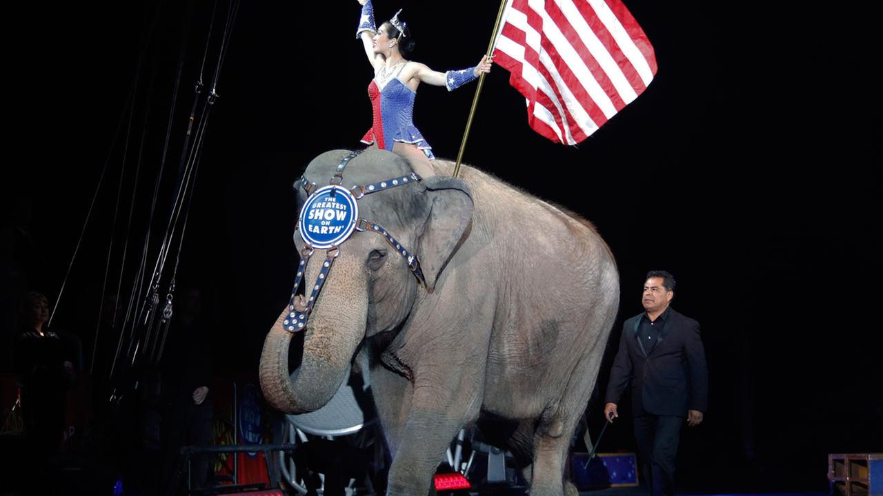 An Asian elephant performs during the national anthem for the final time at the Ringling Bros. and Barnum and Bailey Circus, Sunday, May 1, 2016, in Providence, R.I.
