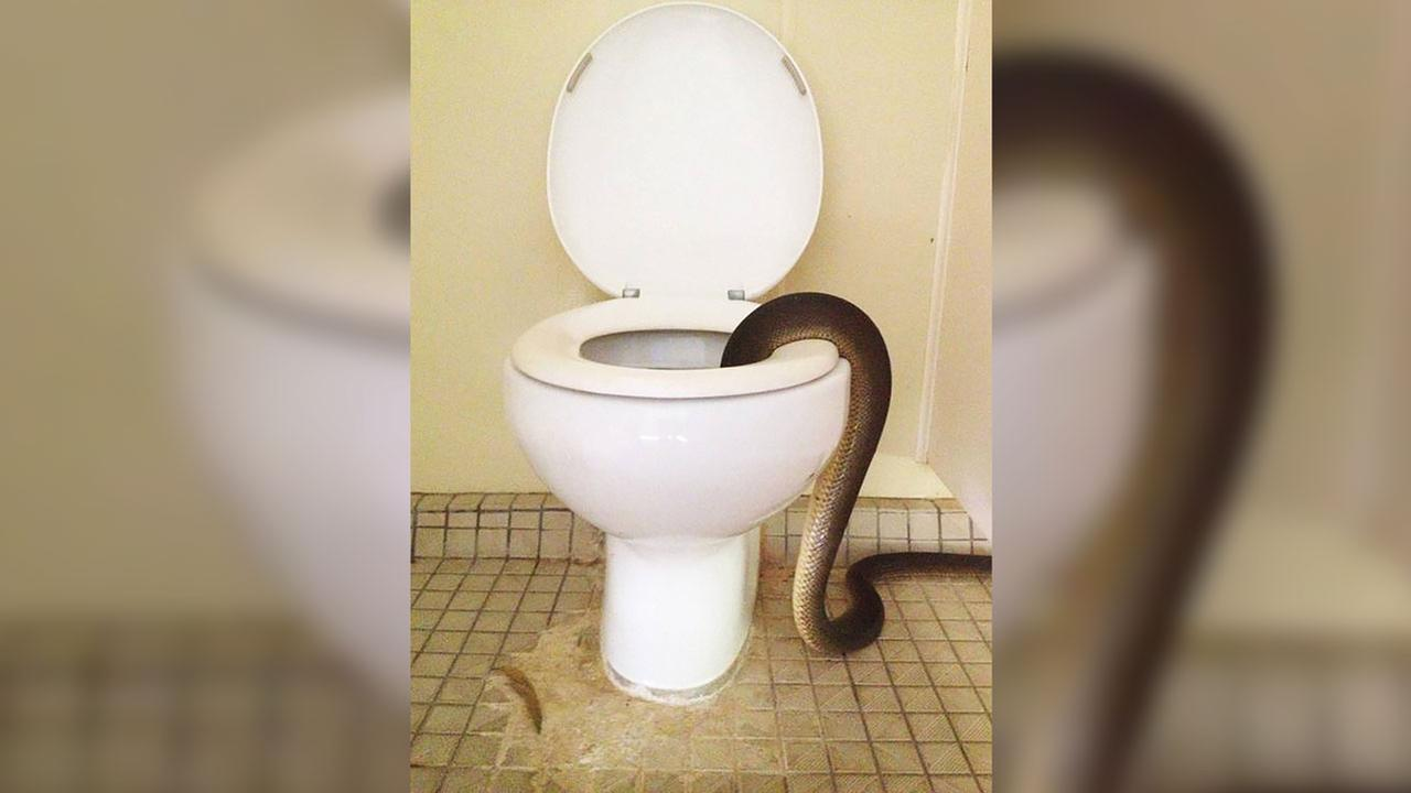 Park rangers pull 10-foot snake from toilet