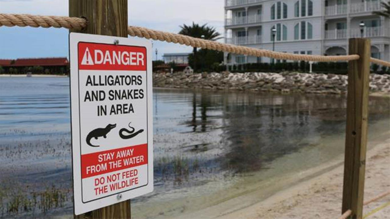 Disney posts new signs, temporary fence at resort lagoon after gator attack