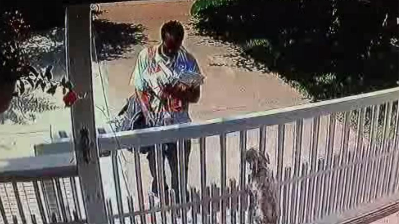 Mailman appears to pepper spray dogs in video