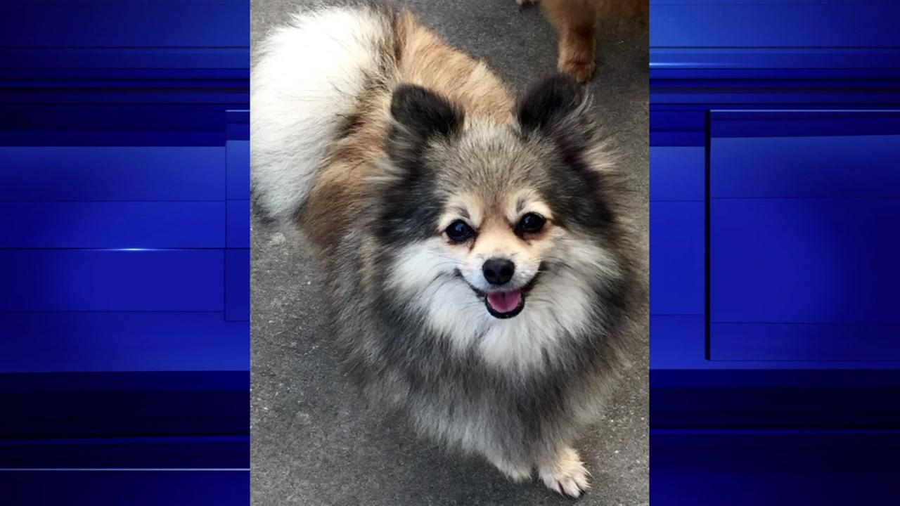 A Harris County homeowner says a swarm of bees living in a utility box killed her Pomeranian.