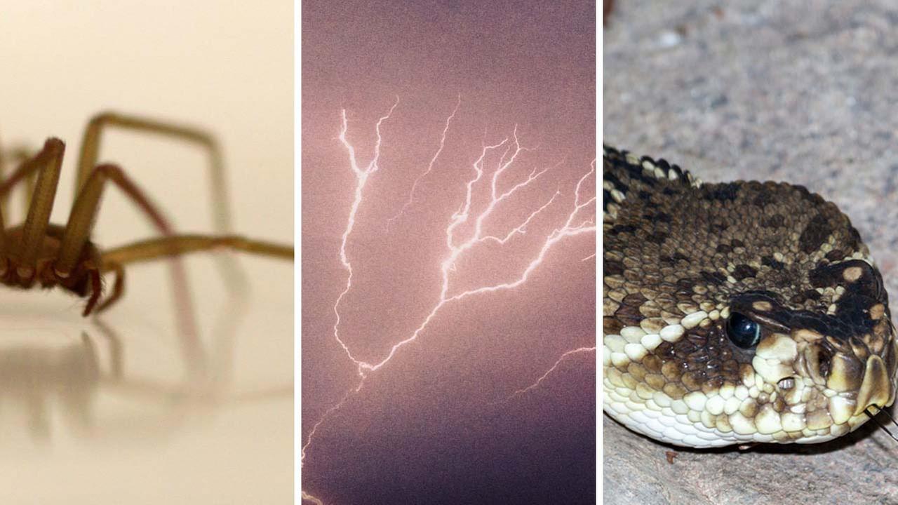 Man survives lightning strike, spider, snake bites