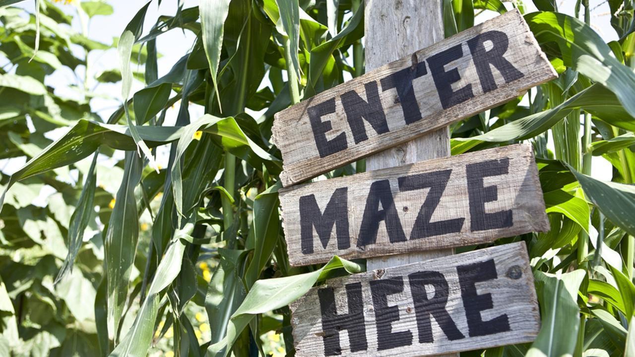 Local area corn mazes for this fall season
