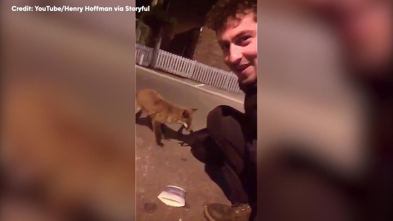 Traveler makes an unlikely friend on his way home.