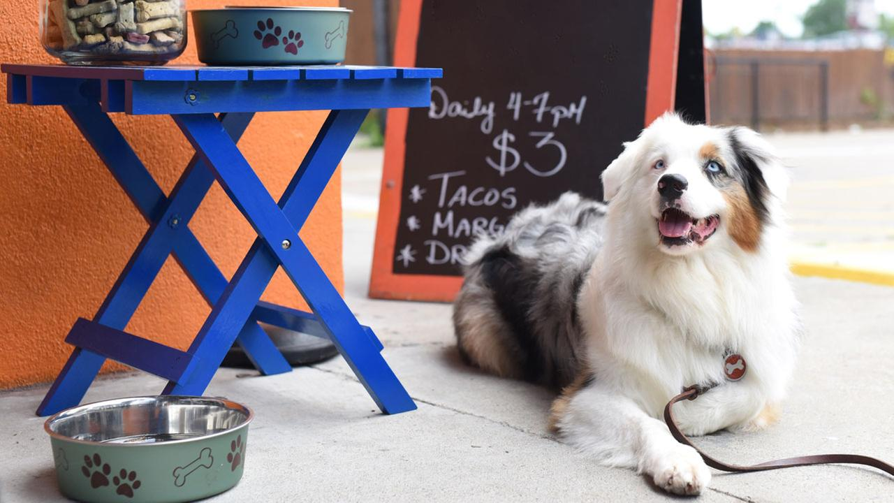 Check out these Houston area restaurants when looking to dine with your canine. Sadie hangs out at Fusion Taco.Sabrina Miskelly