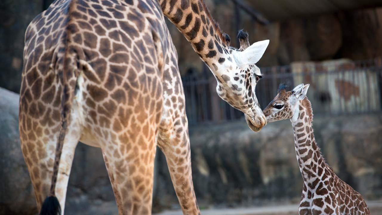 Photo credit: Stephanie Adams/Houston Zoo