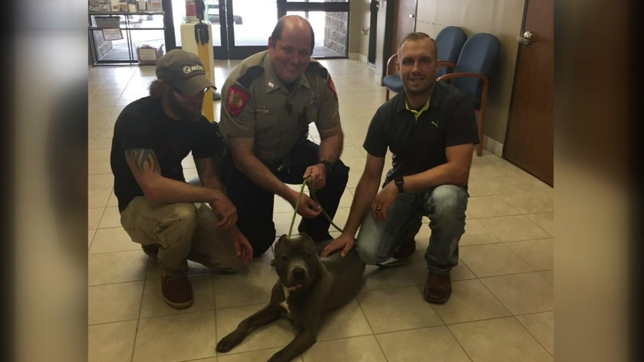 An abused pit bull puppy, rescued by police gets a new home