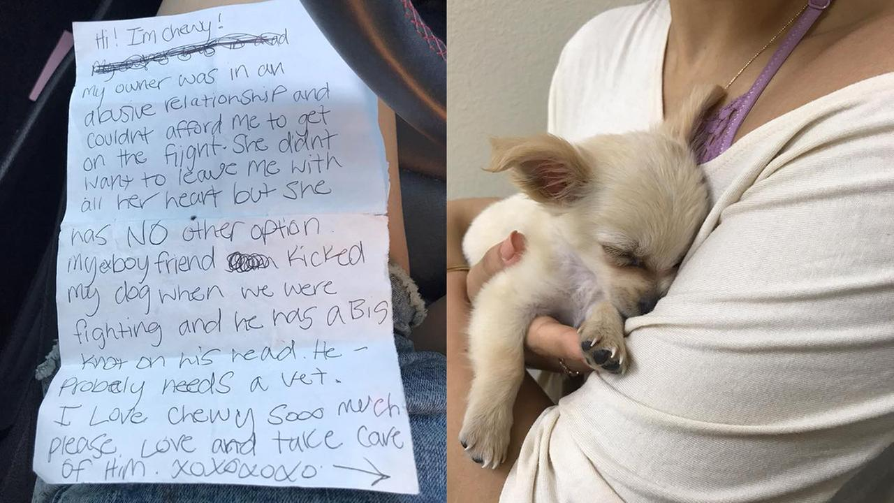 Puppy abandoned in airport alongside note from abused owner – WTVD-TV