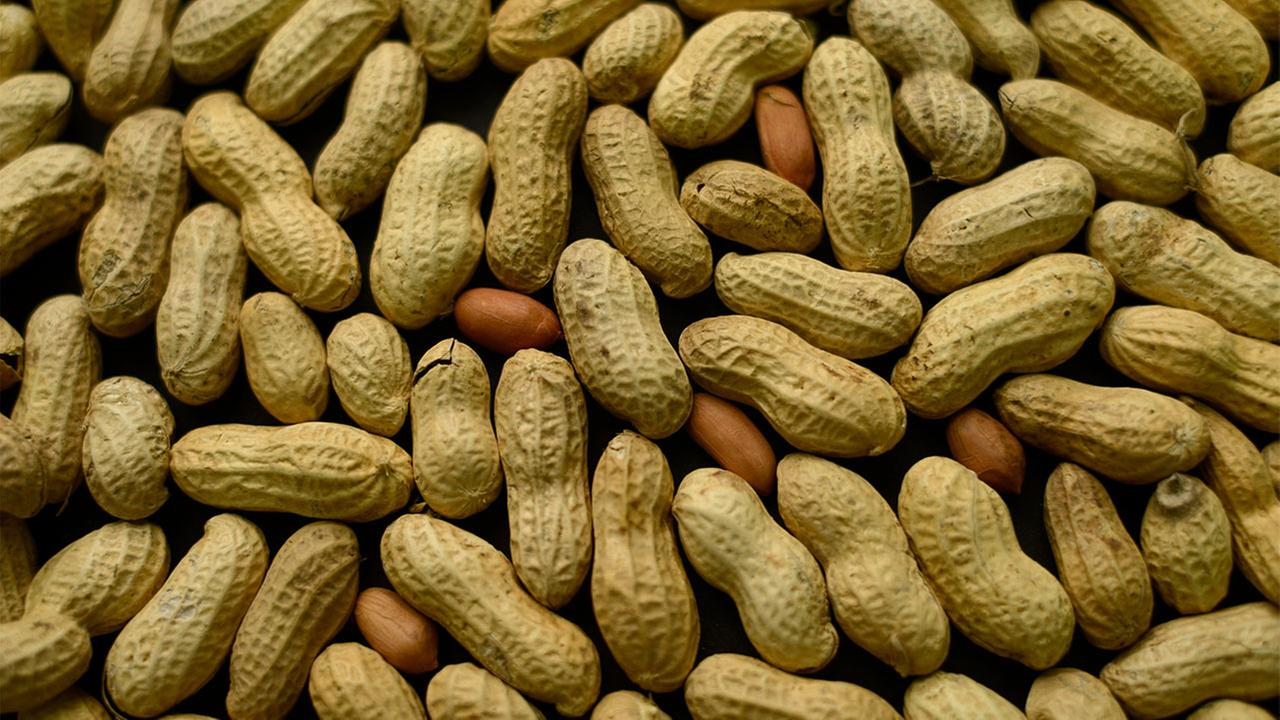 Peanut allergy treatment showing signs of success