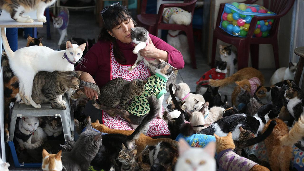 Maria Torero plays with a group of 175 cats