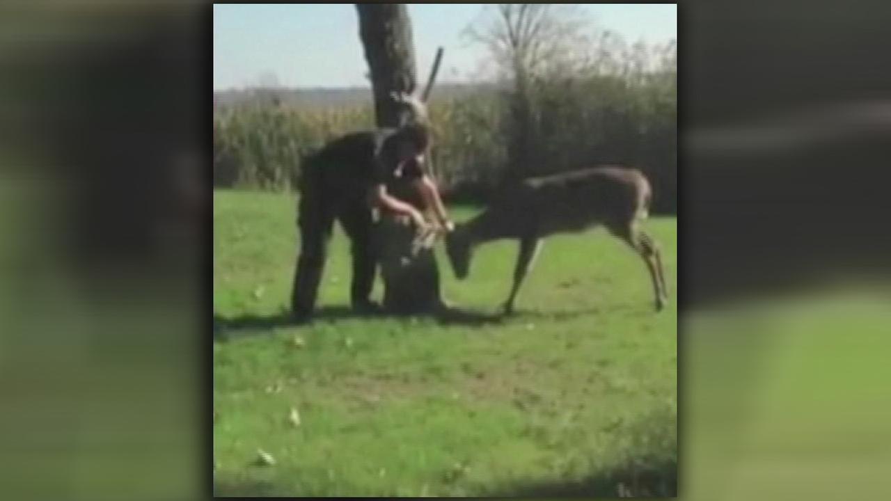 Deputy saving deer