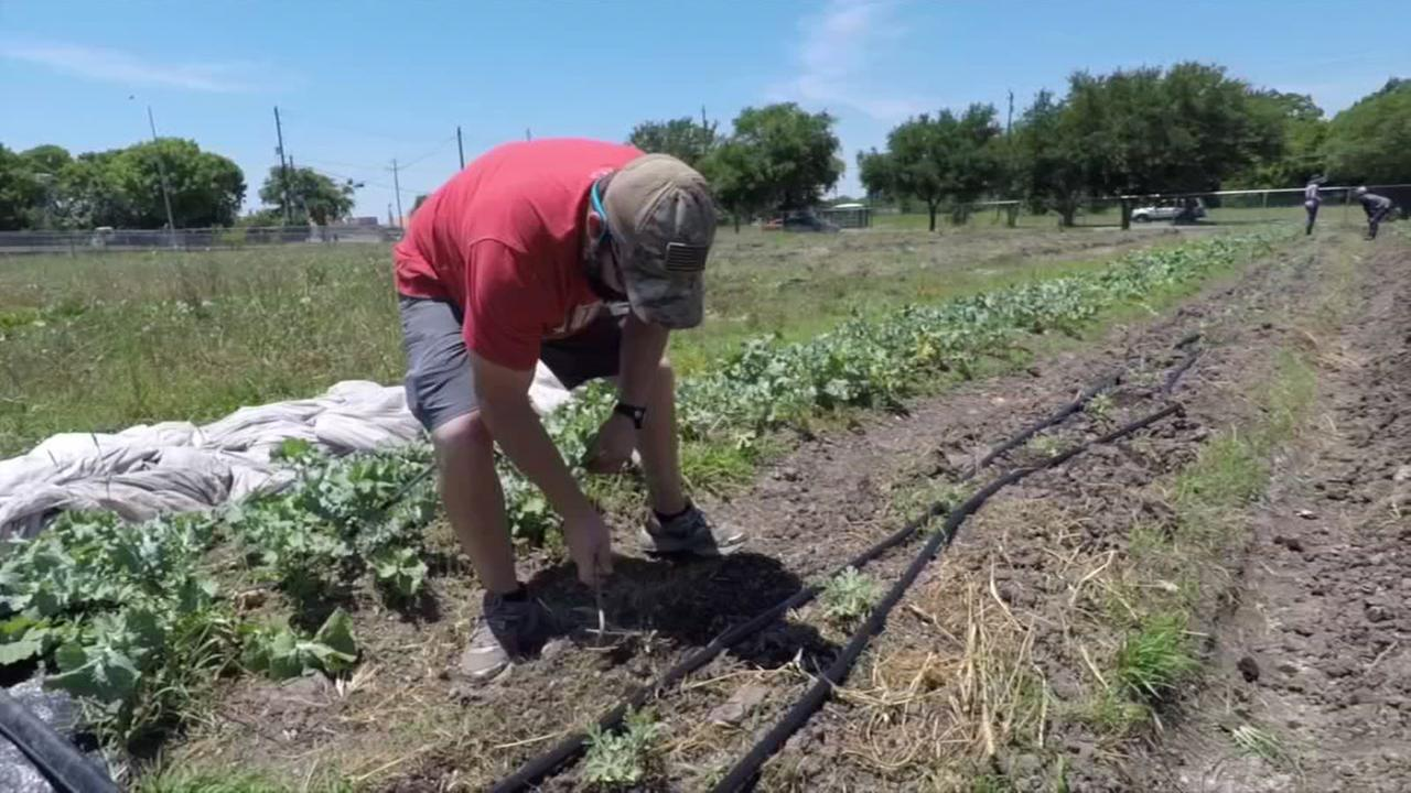 HORE FARMS VIDEO