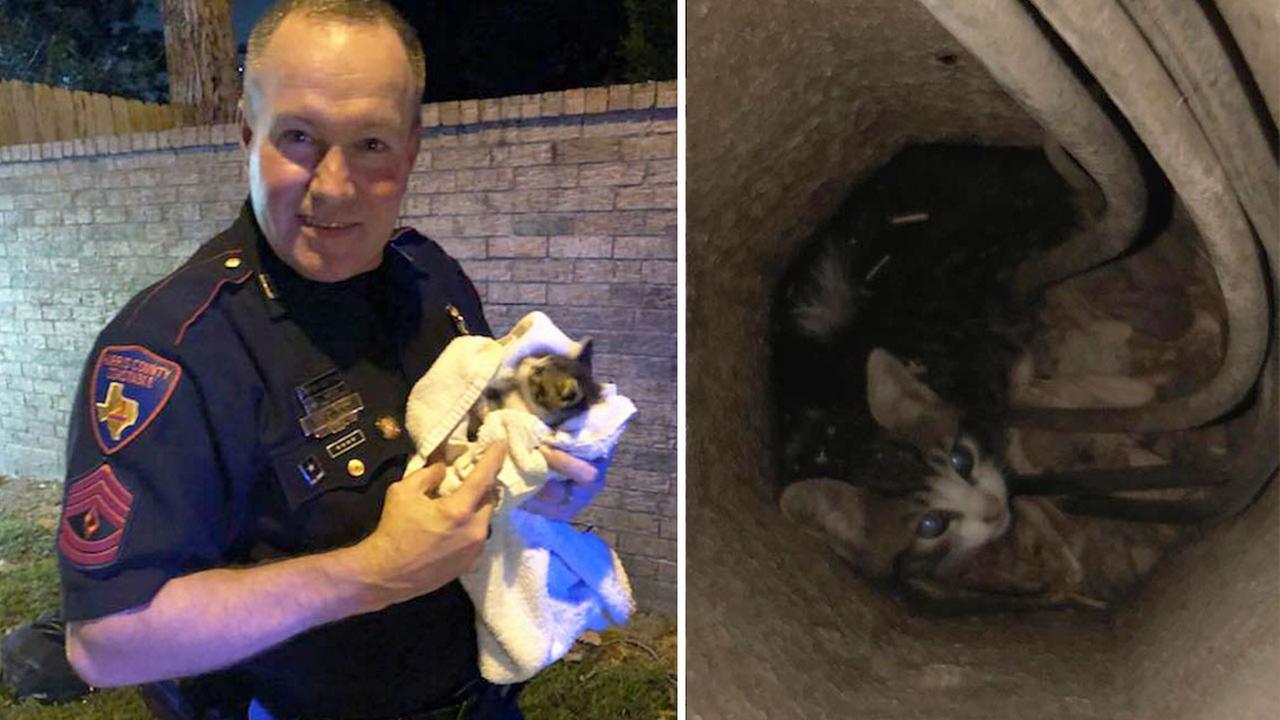 Harris County Pct. 4 deputy constable rescues kitten