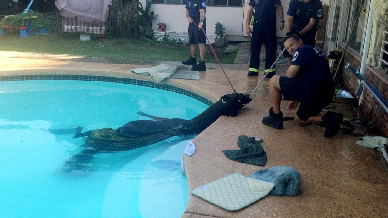 Horse rescued from pool at suburban phoenix home for Pool fill in mesa az