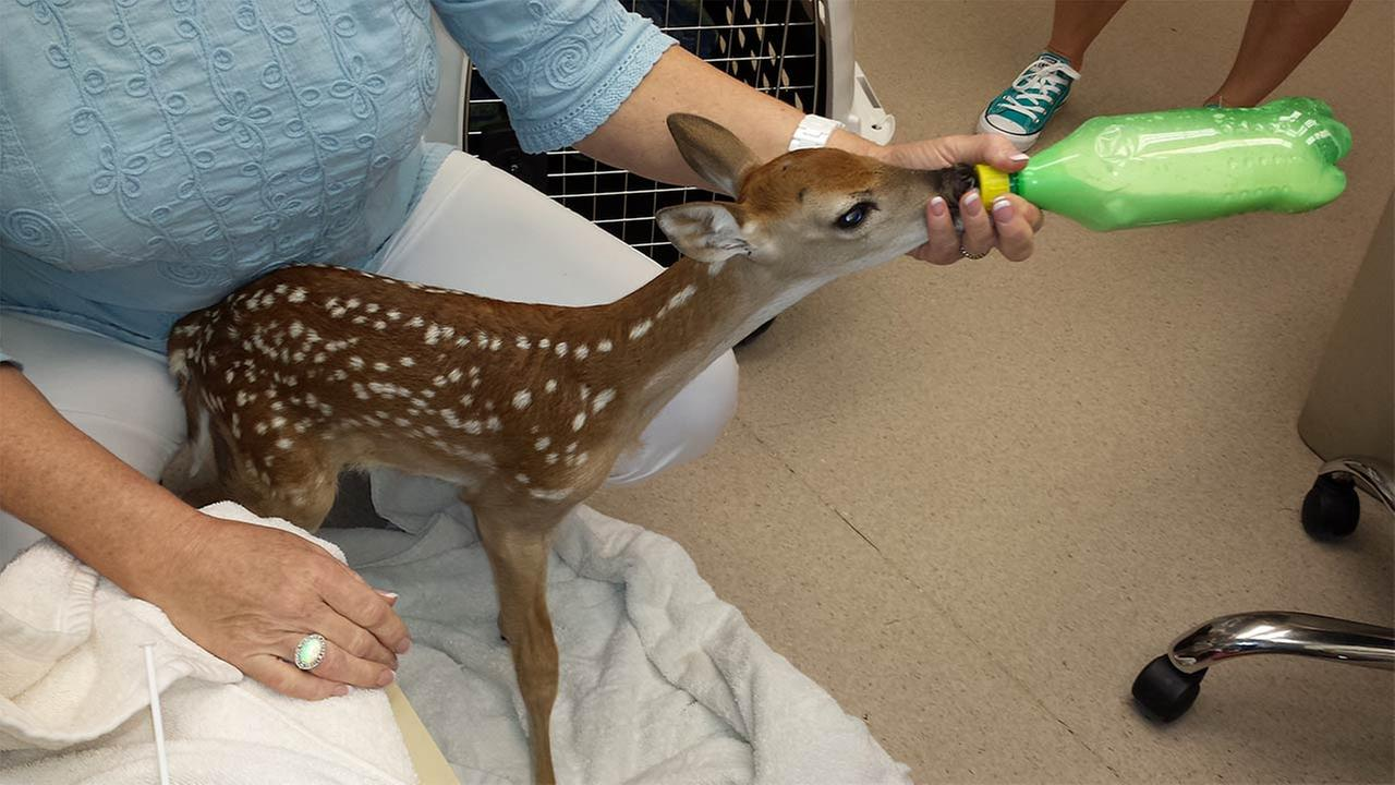 A wide variety of misplaced critters are now at the Texas Wildlife Rehabilitation Centers