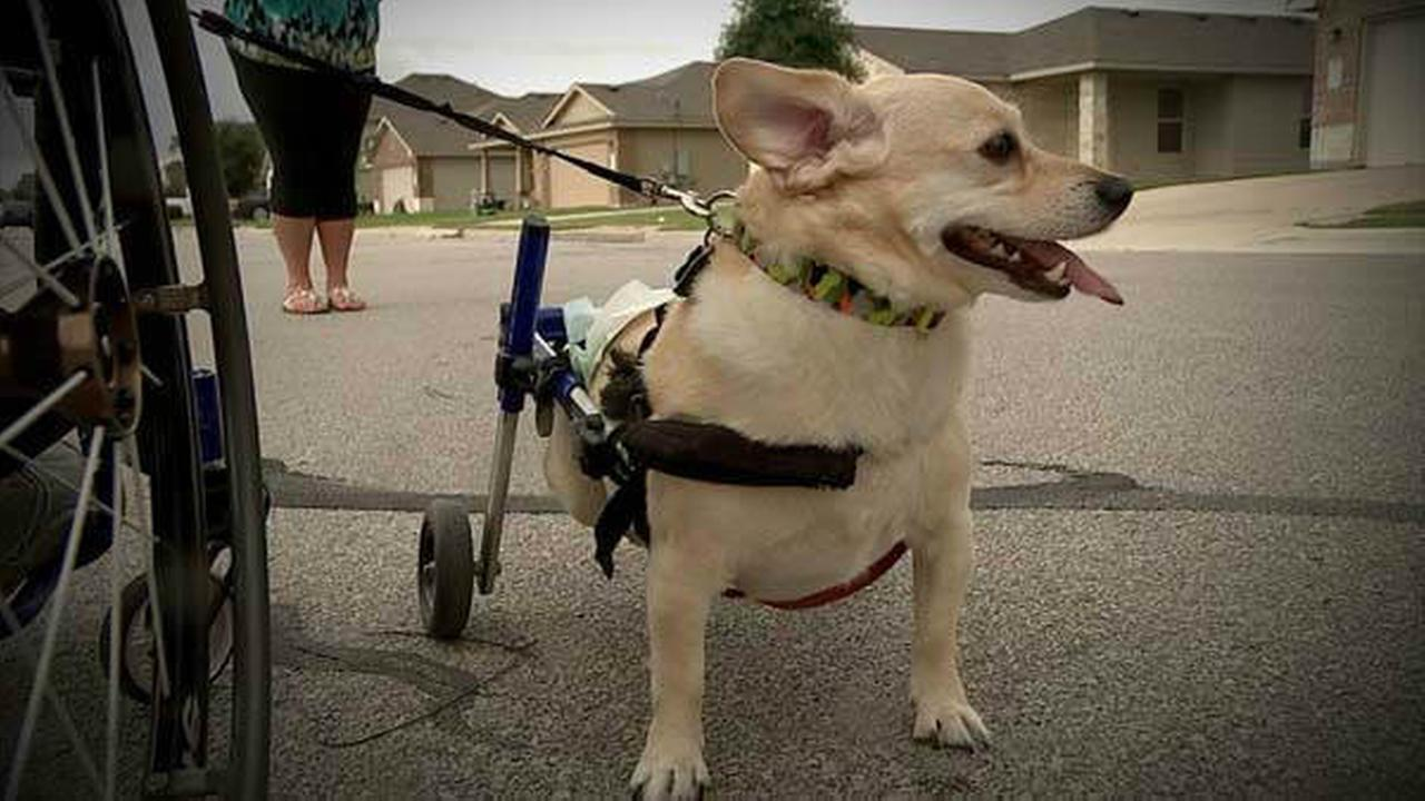 PHOTOS: Wheelchairs connect Austin man and his best friend