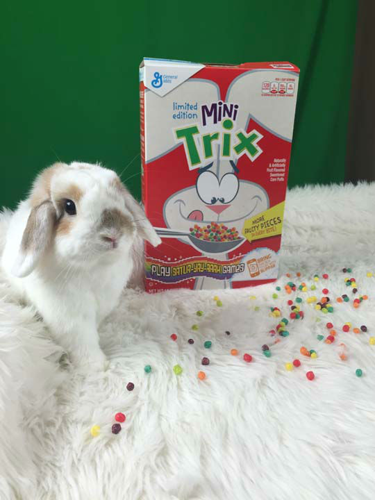 <div class='meta'><div class='origin-logo' data-origin='none'></div><span class='caption-text' data-credit='Photo/General Mills'>His name's Cinnabun, he's a two-pound Holland lop bunny who lives in Houston, and he's the new face of General Mills' Trix cereals.</span></div>