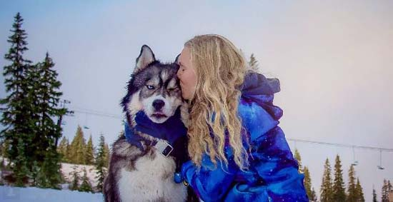 <div class='meta'><div class='origin-logo' data-origin='none'></div><span class='caption-text' data-credit='Instagram: @goldilocksandthewolf'>The story of a rescue husky that became one woman's salvation from domestic abuse and inspired the adventures of Goldilocks and the Wolf</span></div>