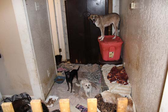 "<div class='meta'><div class='origin-logo' data-origin='none'></div><span class='caption-text' data-credit='Houston SPCA'>The Houston SPCA rescued 67 dogs today from a self-described ""rescue.""</span></div>"