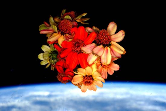 <div class='meta'><div class='origin-logo' data-origin='none'></div><span class='caption-text' data-credit=''>Flowers grown on the Space Station then released in space.</span></div>