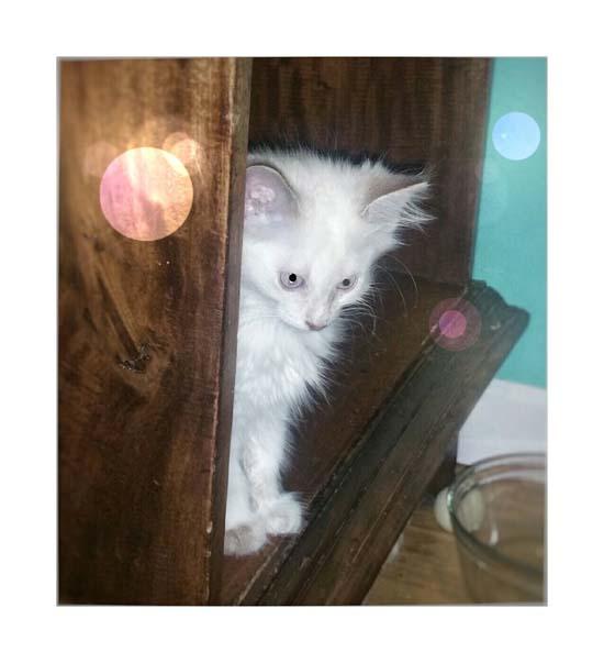 <div class='meta'><div class='origin-logo' data-origin='none'></div><span class='caption-text' data-credit='Vancouver Orphan Kitten Rescue Association (VOKRA)'></span></div>