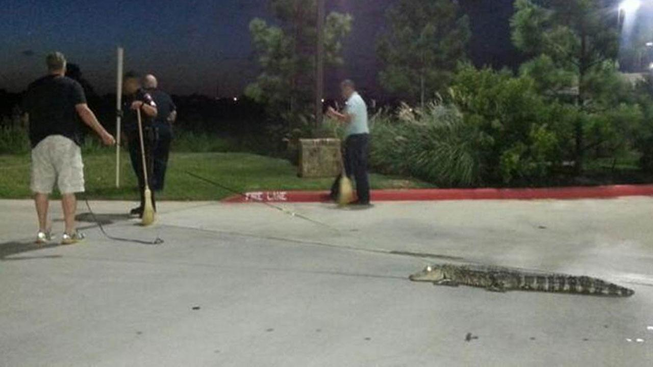 Alligator at McDonalds