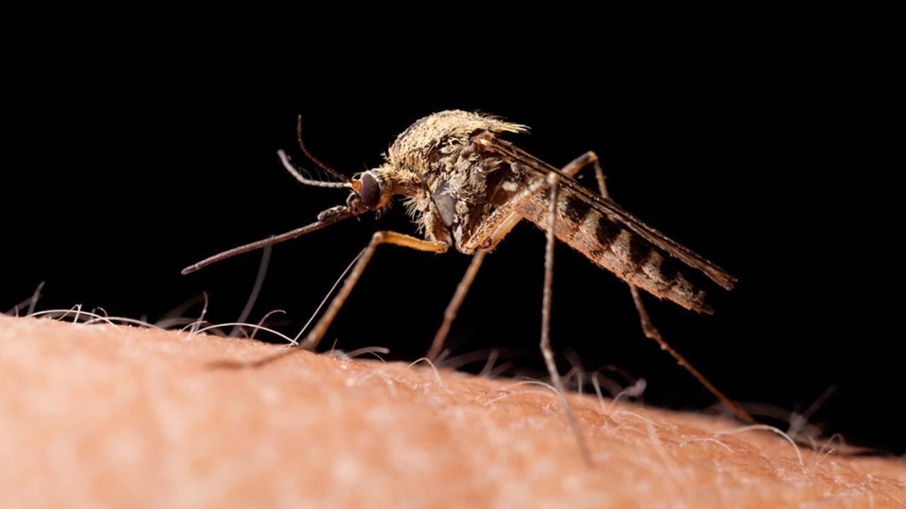 Experimental Zika vaccine to begin human testing
