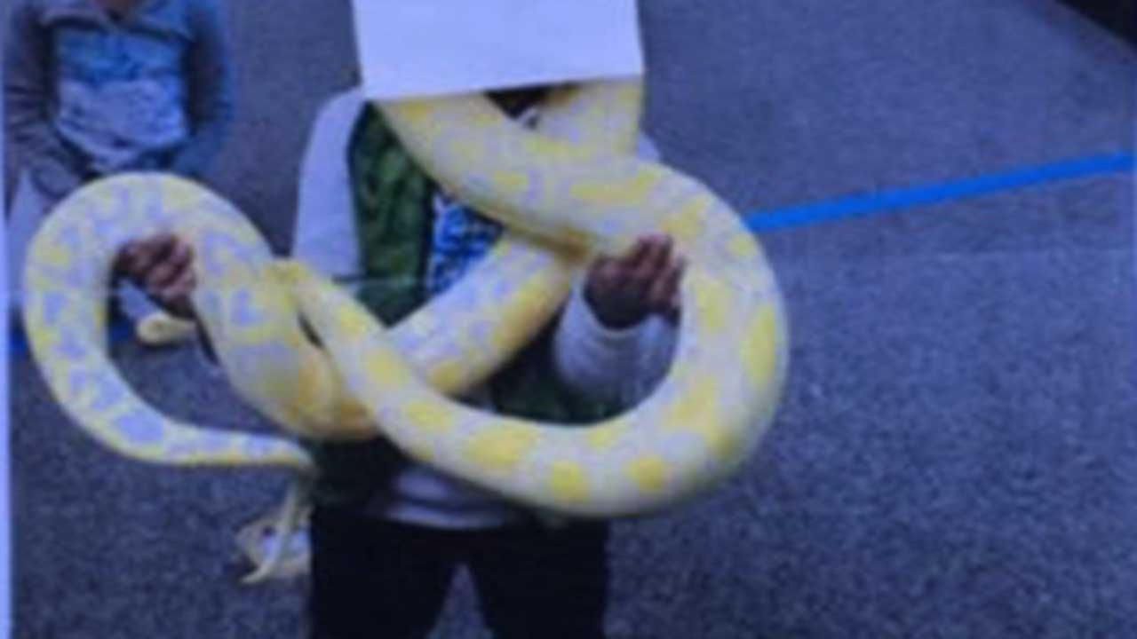 A parent provided us with this photo of her son with a python