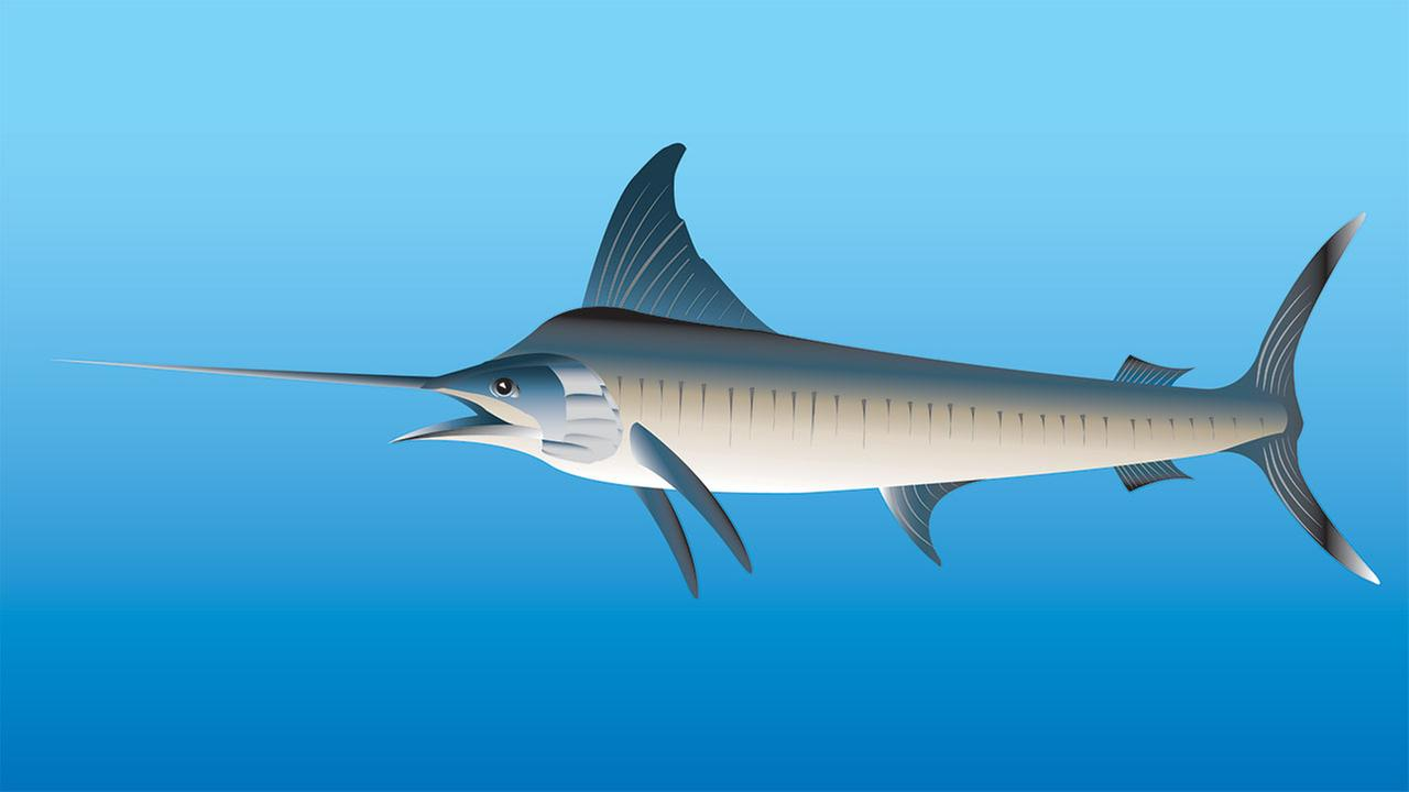 An artists rendition of a billfish