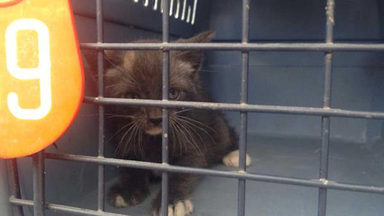 82 cats, 1 dog confiscated from Houston home