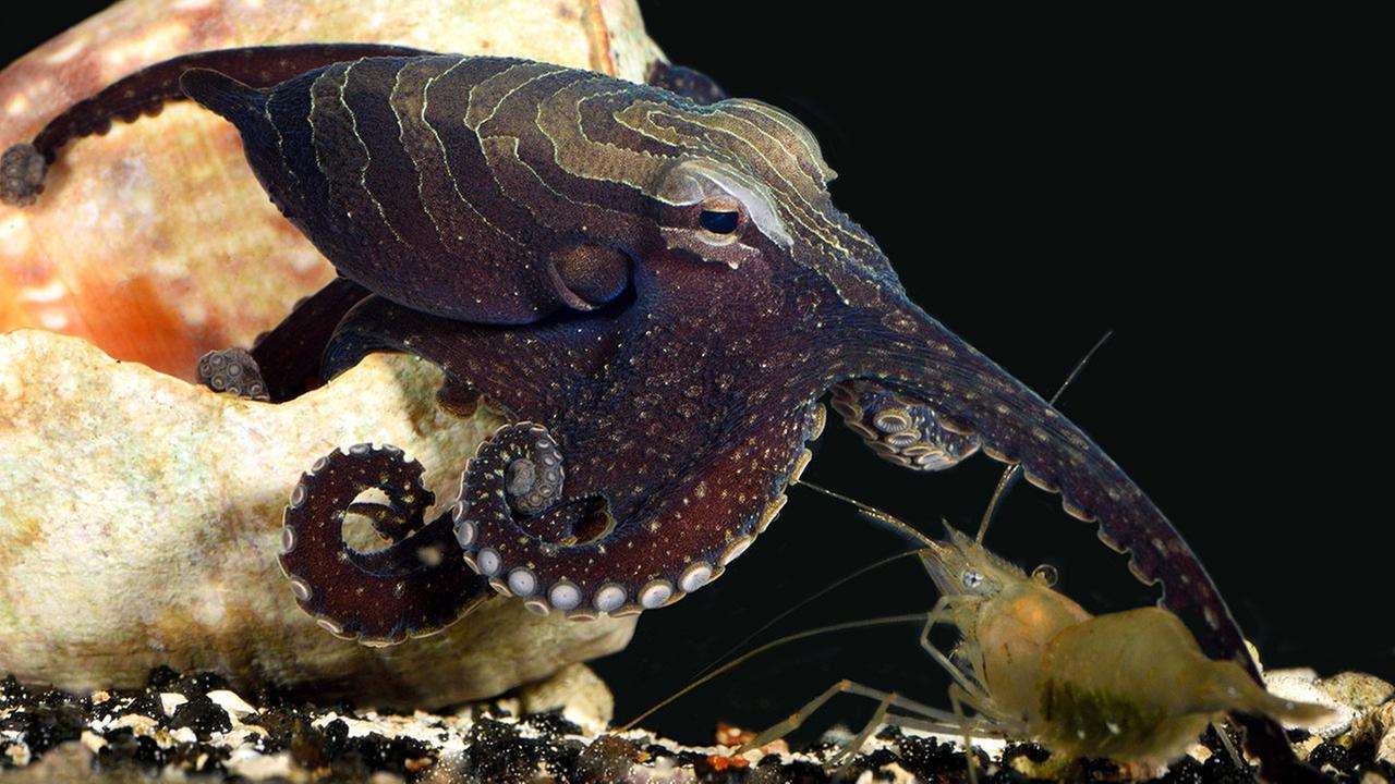 Romantic octopus