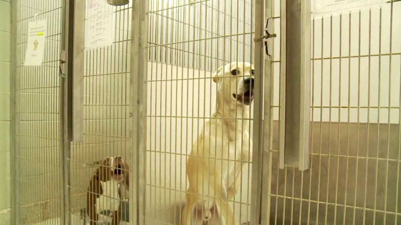 Shelter dogs at epicenter of quake