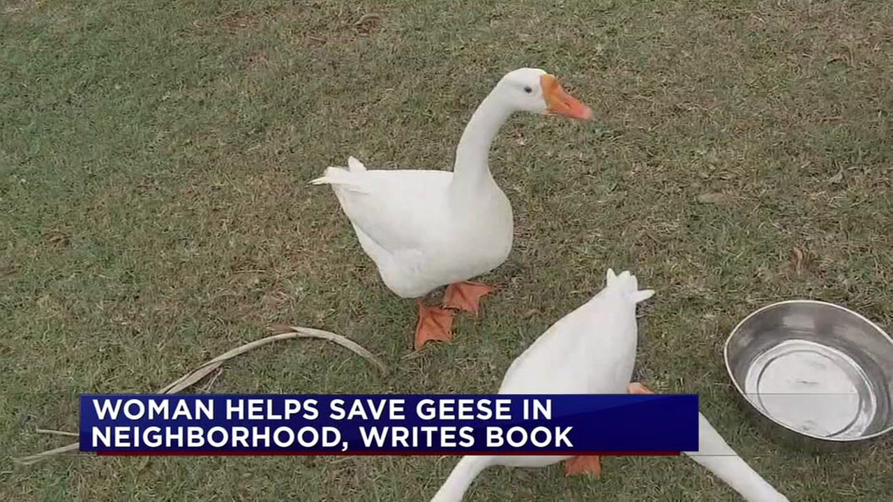 Clear Lake Shores woman saves geese