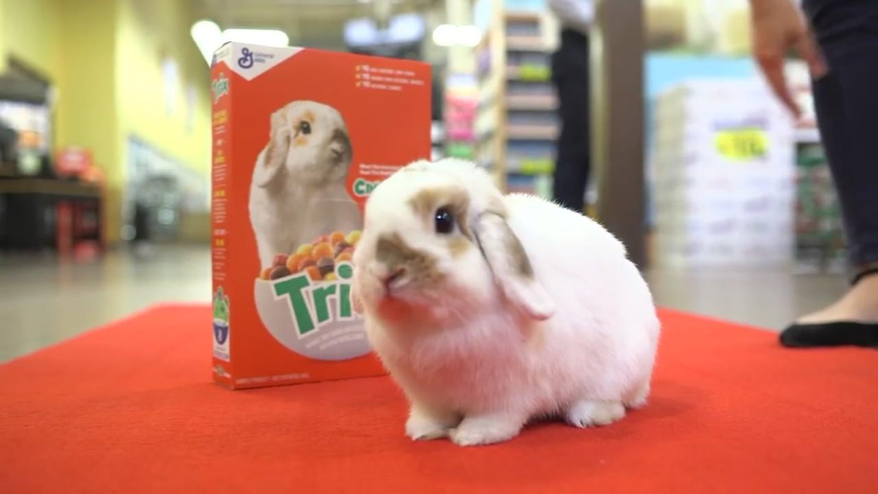 Cinnabun Trix Rabbit