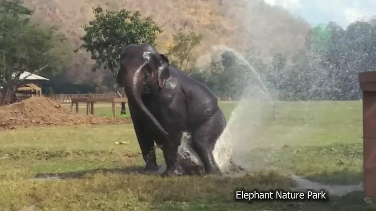 Elephant Sprinklers
