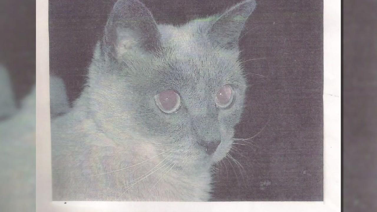 Cat named worlds oldest