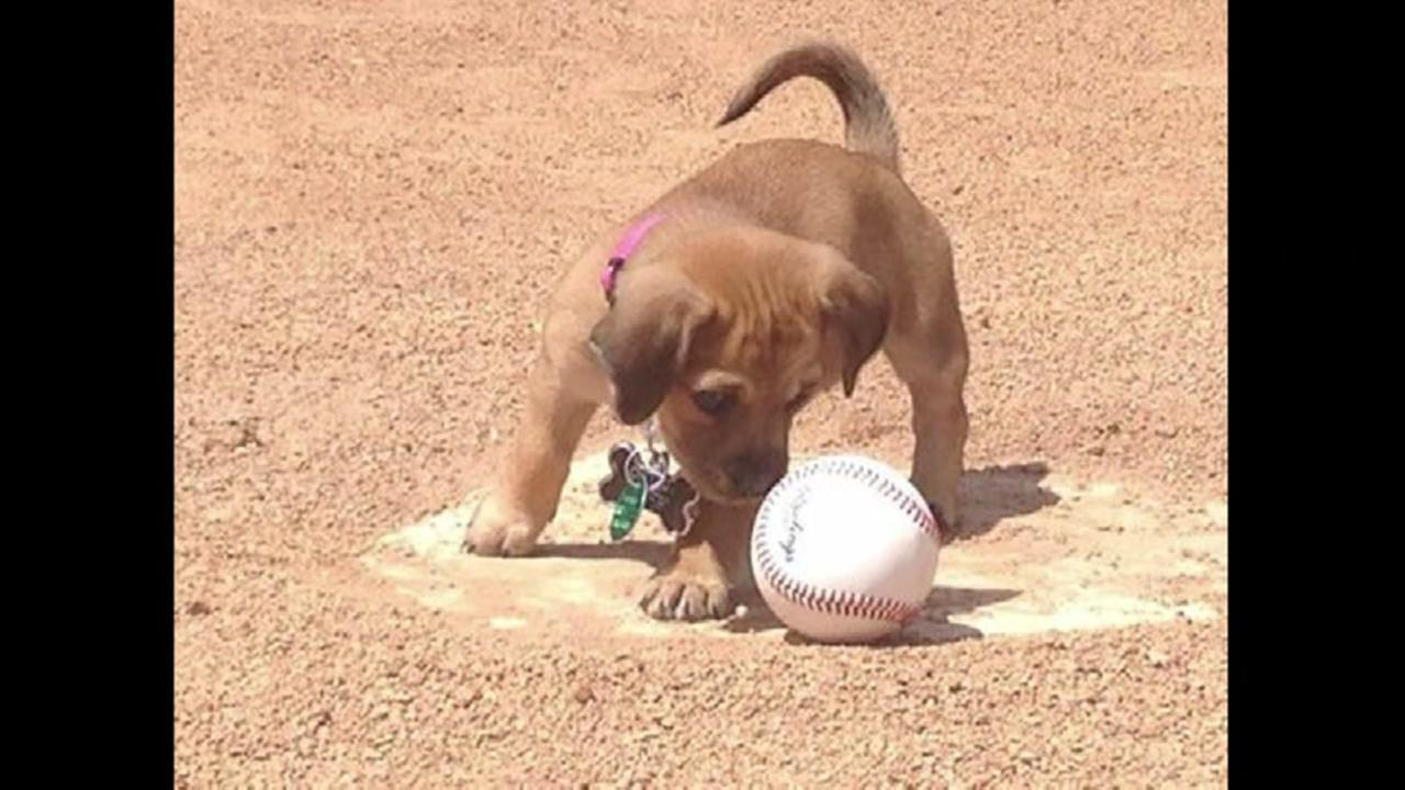 College team has new bat dog