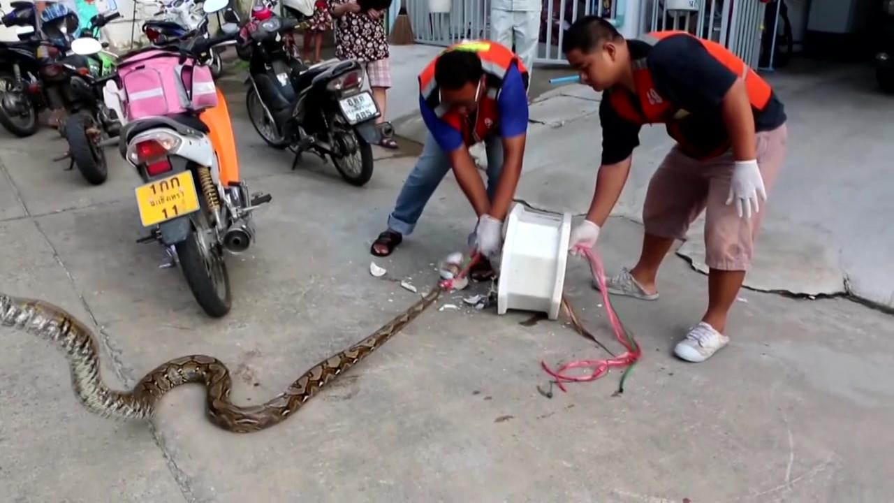 Python attacks main in bathroom