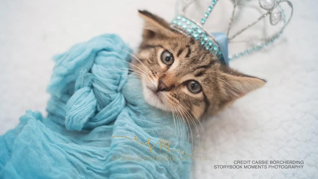 Elsa Cat Photos