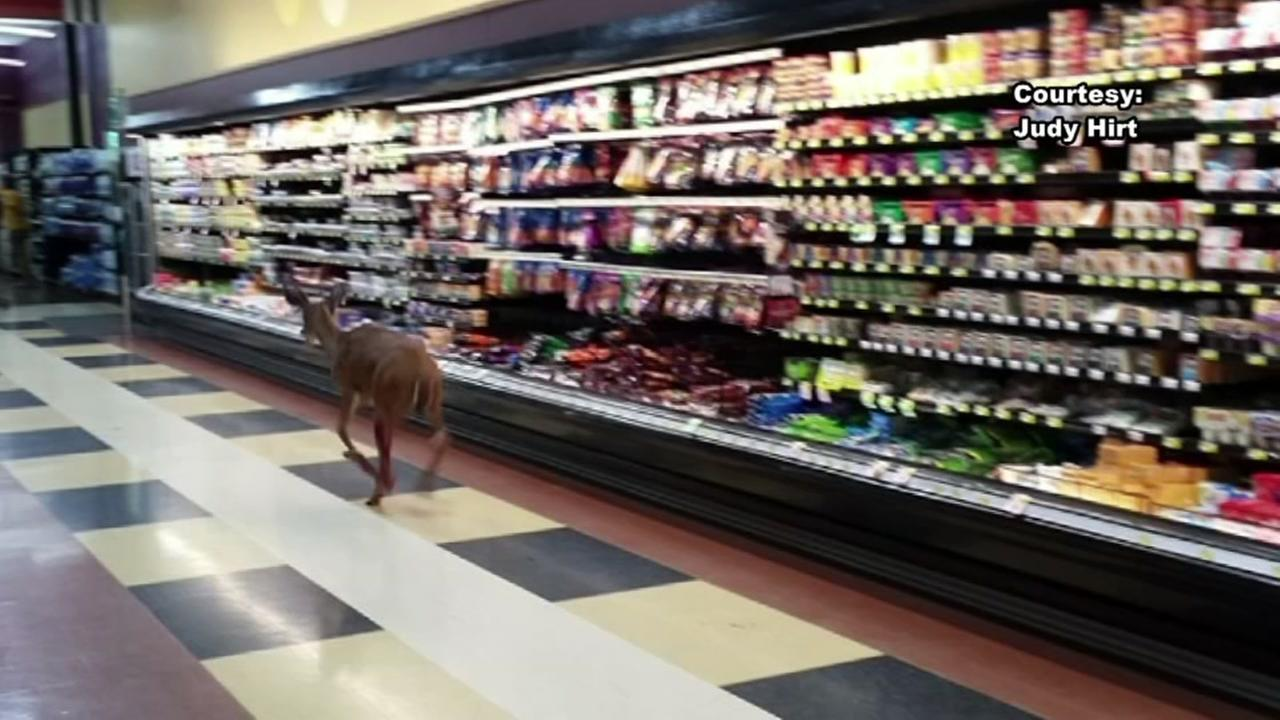 Deer runs into Piggly Wiggly