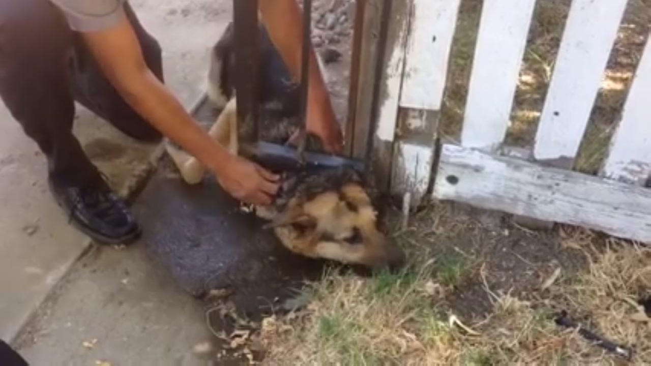 Firefighters rescue dogs stuck under fence