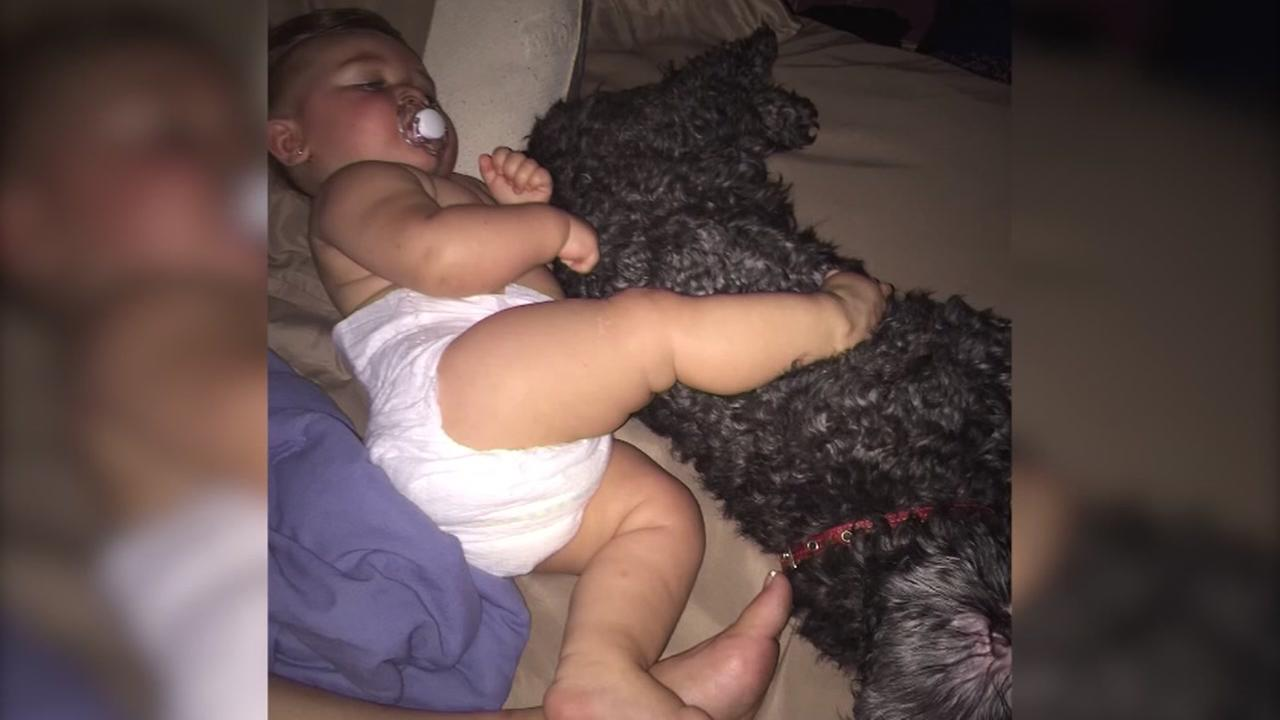 Dog dies protecting baby from fire